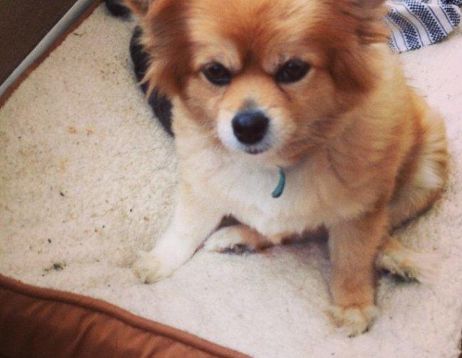 Amy Dee's dog, Isla